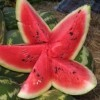 Görögdinnye termesztése házilag