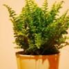 Szobanövények gondozása házilag