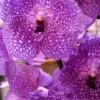 Trópusi orchidea gondozása házilag