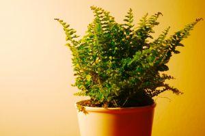 Önöntöző készítése növényeknek házilag