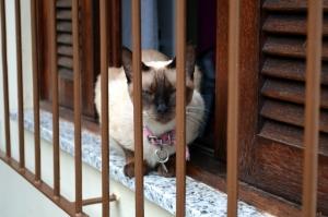 Büdös macskaalom szagtalanítása házilag