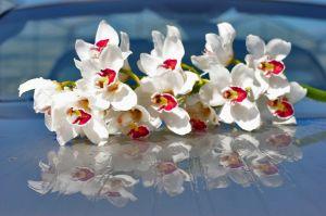 Trópusi orchidea szaporítása házilag
